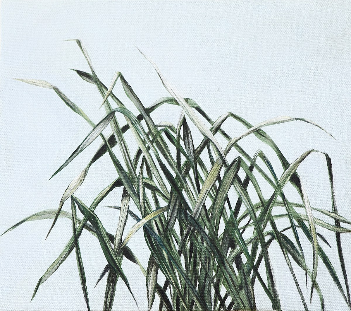 Vegetationszonen II, Michaela Kern