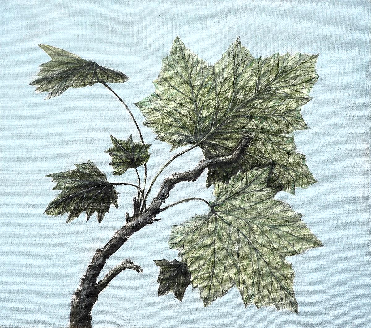 Vegetationszonen III, Michaela Kern